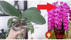 Orchidey pestujem už 17 rokov a toto je zaručený spôsob, ako ich vždy prinútim kvitnúť na maximum: Zlepšovák, ktorý funguje už roky! Plants, Gardening, Orchids, Lawn And Garden, Plant, Planets, Horticulture