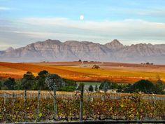 Wine Estate in Stellenbosch, South Africa #Vineyard