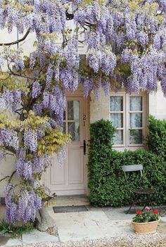 Wisteria covered home entry More