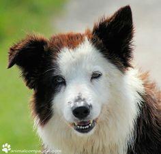 Comment réagir face à un chien seul que l'on croise ? Quel comportement adopter s'il montre une certaine agressivité ?