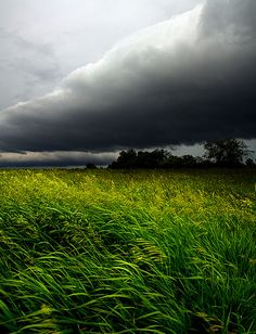 ♂ Amazing nature A Wind Blows storm over the green grass field