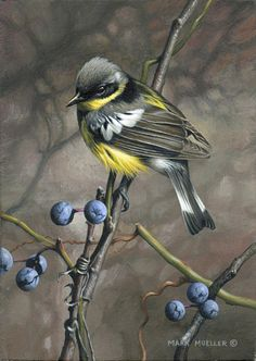 Acrylic painting - Magnolia Warbler painting by Mark Mueller