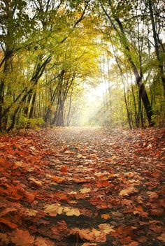 Paths with crunchy Autumn leaves