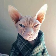 When you get comfortable in your bathrobe and the doorbell rings...