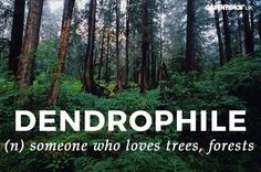 Dendrophile tree hugger for the win Unusual Words, Unique Words, Beautiful Words, Cool Words, Words Quotes, Wise Words, Sayings, Qoutes, Tree Quotes