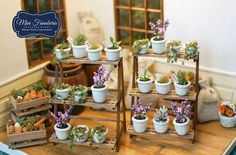Miniature plants~. I could spend many gruelling months trying to make these myself, or I could just happily stare at pictures like this.