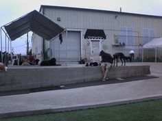I now work PT at a Doggy Daycare!