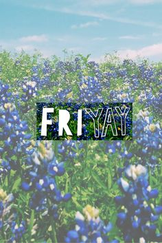 It's Friday everybody! Or should I say Fri-Yay?! (scheduled via http://www.tailwindapp.com?utm_source=pinterest&utm_medium=twpin&utm_content=post54729152&utm_campaign=scheduler_attribution)