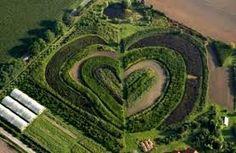 corazones en la naturaleza curiosidades - Buscar con Google