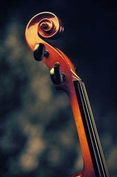 Violín / Violin / Viola