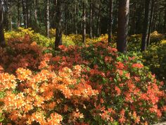 Rhododendron Park in Haaga, Helinki Rhododendron Park, Plants, Plant, Planets