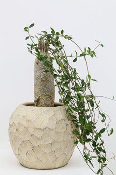 Kohei Oda's collection of cacti