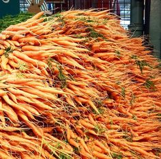 Carrots (photo credit: Fed Sotto)