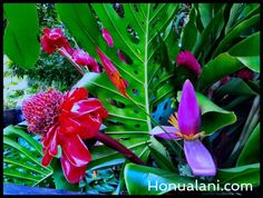Tropical Hawaiian flower bouquets and arrangements created for Christmas decorations on the Hawaiian Island of Kauai, Hawaii using mostly red flowers. Hawaiian Flowers, Tropical Flowers, Red Flowers, Kauai Hawaii, Hawaiian Islands, Try It Free, Your Image, Christmas Time, Your Photos