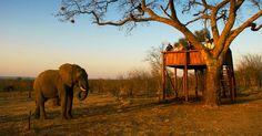 Victoria Falls Safari Lodge, Victoria Falls, Zimbabwe #luxurylink
