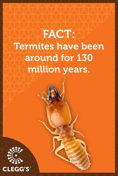Today's #PestControl Fact! Termite Control, Pest Control Services, Fun Facts, Interesting Facts, Food, Insects, Community, Essen, Meals