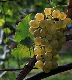 Inviti di-Vini: luglio 2014 - 18 eventi enogastronomici in Italia da non perdere, per un'Estate all'insegna del buon gusto!