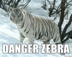 Bengal Cats Snow 26 Hilariously Accurate New Names For Animals - This is the best list of funny animal names, and we've got to say it's rather amusing! Sometimes you wonder what people were thinking of when they named animals. Funny Animal Names, Animal Memes, Funny Animals, Cute Animals, Funny Names, Jungle Animals, Snow Tiger, Pet Tiger, Tiger Face