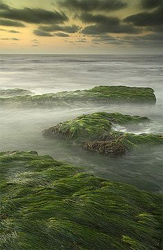 """""""Seagrass"""" by Will Shieh"""