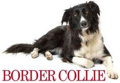 KLIP SELV DIN BORDER COLLIE - Hjemmeklippe Skole #hundepels #hundevideo #hundepels #hundebørster