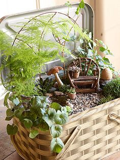 Fairy Garden, complete with little furniture! Plants include: violet, ivy and plumed asparagus! More info +more miniature garden ideas: http://www.midwestliving.com/garden/container/miniature-garden/