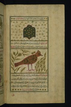 Lyre and Cygnus  These illustrations from Walters manuscript W.659 depict Lyre (al-shalyaq) and Cygnus (al-dajajah). #ArtoftheDay