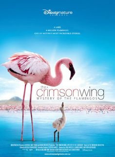 Disneynature's The Crimson Wing: Mystery of the Flamingos takes you to join millions of mysterious and majestic flamingos on Lake Natron in Tanzania, Africa. #documentaries #flamingos #africa
