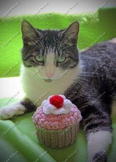 Birthday Cupcake Kitten Gershwin the Kitty Cat Fine Art Photography Print $14.00 - $50.00