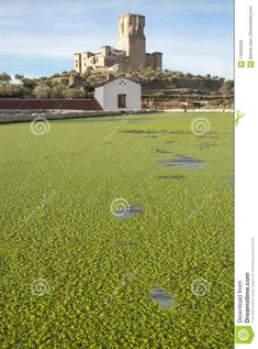 Belalcazar livestock basin full of green cover of swollen duckweed with castle at the bottom