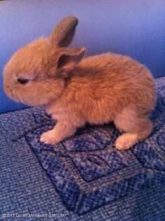 OMG! this is like the cutest bunny in the world!