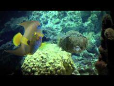 National Aquarium Commercial: Blind Date