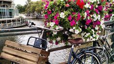 Canal fleuri d'Amsterdam © Delphine Poirier