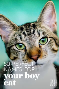 Adding a pet to your family is always exciting but naming them can be tricky. If you're feline happens to be male we have a list of 50 names to call your boy cat. Kitten Names Unique, Kitten Names Boy, Baby Kittens, Kittens Cutest, Cute Boy Names, Twin Names, Cute Baby Boy, Name List, Cat Boarding