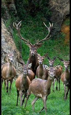 Google+ Rare Animals, Animals And Pets, Strange Animals, Beautiful Creatures, Animals Beautiful, Pretty Animals, Stag Animal, Wapiti, Whitetail Deer Pictures