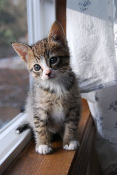 """""""A new kitten will turn your house upside down, but, at the same time, make everything seem right."""" --Jo Kittinger"""