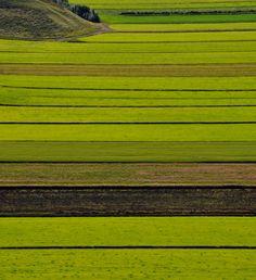 Farm in Iceland