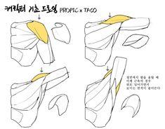 Arte Com Grey's Anatomy, Arm Anatomy, Human Anatomy Drawing, Human Body Anatomy, Body Reference Drawing, Human Poses Reference, Body Drawing, Anatomy Reference, Manga Drawing Tutorials