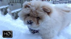 Cute Puppy Eats Snow