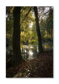 Druid Loch.  Taken in the grounds of Drumlanrig Estate, Dumfries & Galloway, Scotland.  Check it out on my Flickr page.  https://flic.kr/p/Sg5sXe