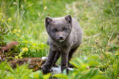 Foxes_309.jpg