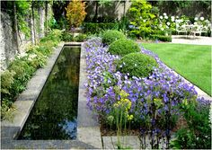 Campanula surrounded boxwood walls offer contrast in form (Paul Doyle Garden Designer). Purple Garden, Colorful Garden, Formal Gardens, Outdoor Gardens, Garden Landscape Design, Garden Landscaping, Lawn Maintenance, Water Features In The Garden, Contemporary Garden