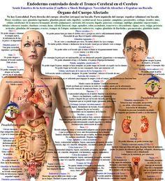 Pasadofuturo.com Endodermo Conflictos Organos Nueva Medicina Germanica Hamer 5LB Leyes Biologicas NMG