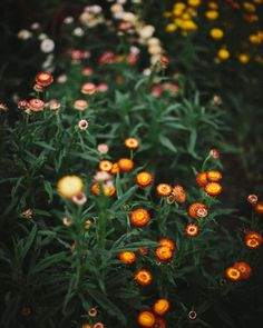 Strawflower Fall Arrangements, Annie, Planting Flowers, Seeds, The Past, November, Instagram Posts, Plants, Flora