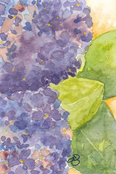 Hydrangea Postcard – Day 8 30 in 30 -  4 x 6, watercolor on cold press paper. © 2014 Sheila Delgado