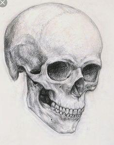 Skeleton Drawings, Skeleton Art, Drawings Of Skulls, Dragon Drawings, Anatomy Drawing, Anatomy Art, Skull Anatomy, Art Drawings Sketches, Pencil Drawings
