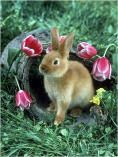 Richard Stacks - Rabbit Sitting Near Flowers