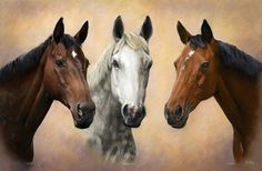 Gallery of examples of commissioned head & neck portraits of horses by Yorkshire's leading equine portrait artist Mike Haken Horse Drawings, Animal Drawings, Art Drawings, Horse Pictures, Pictures To Draw, Beautiful Horses, Animals Beautiful, Arte Equina, Colored Pencil Artwork