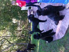 Poodle party....I wanna go!!!
