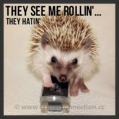 THEY SEE ME ROLLIN'...THEY HATIN'
