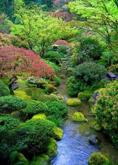 low plants in japanese garden Asian Garden, Beautiful Landscapes, Beautiful Gardens, Parcs, Water Garden, Garden Stream, Garden Park, Dream Garden, Garden Landscaping